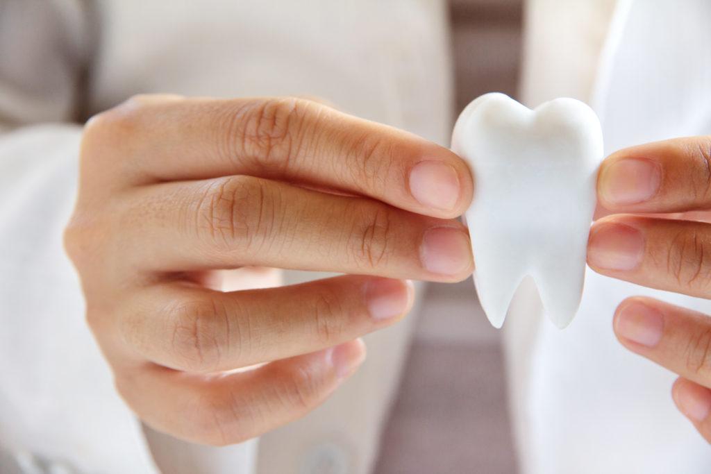 cda dentist holding teeth